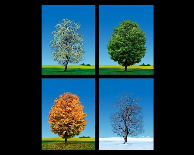 4 seasons videos